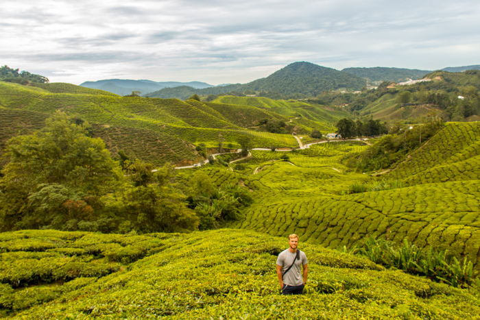Chilling in the planatation.