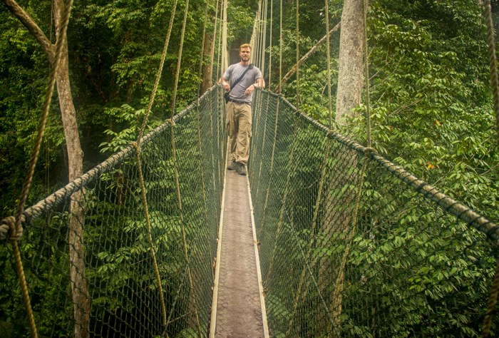 Canopy Walk . high up in the trees.