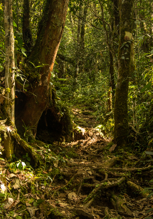 Hiking through the Highlands. Trail from Brinchang to Tanah Ratah.