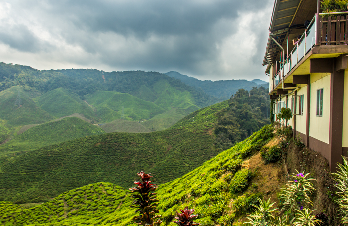 Bharat Tea Plantation ... one of the bigger ones.